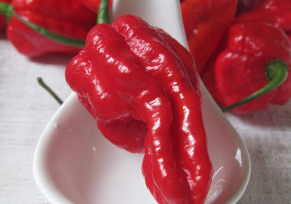 Capsaicin – der Stoff aus dem Chiliträume sind!